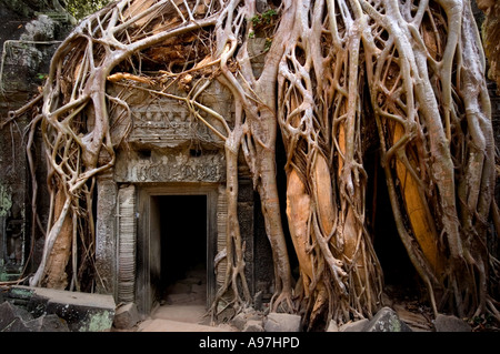 Angkor Wat, Siem Reap, temple overgrown by tree roots - Stock Image