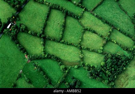 Green fields of Ireland - Stock Image
