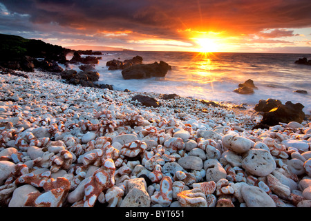 Sunset on beach with coral. Maui, Hawaii. - Stock Image