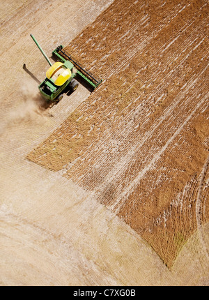 Green harvester combining a field of lentils on the prairie - Stock Image