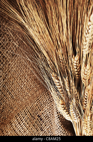 Wheat border over canvas background, harvest time, thanksgiving holiday decoration - Stock Image