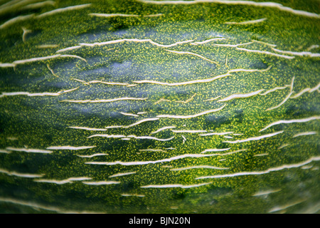Green melon fruit skin macro texture background - Stock Image