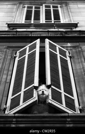 Dog at window - Stock Image