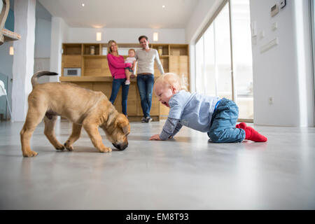 Male toddler playing with puppy on dining room floor - Stock Image