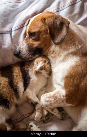 A brown dog and cat wake up hugging from a nap - Stock Image