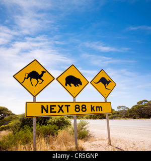 Famous sign on the Nullarbor Plain, South Australia, look out for camels, wombats, kangaroos. - Stock Image