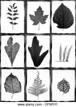 collage with various leaves - Stock Image