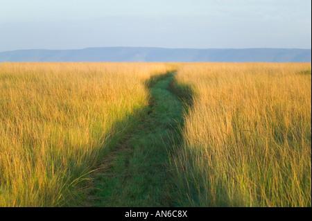 Path among tall grass on the savannah, Masai Mara, Kenya - Stock Image