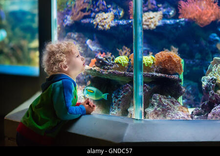 Little boy watching tropical coral fish in large sea life tank. Kids at the zoo aquarium. - Stock Image