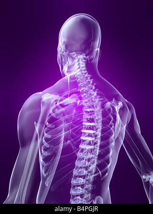 skeletal back - Stock Image
