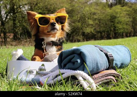 Summer dog with sunglasses and suitcase - Stock Image