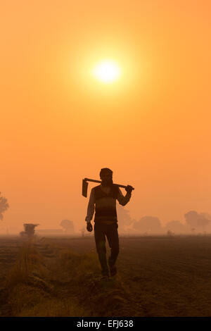 India, Uttar Pradesh, Agra, man walking to work holding hoe at sunrise - Stock Image
