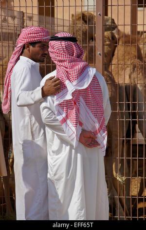 Men buying camels for meat at camel market, Al-Ain, Abu Dhabi, United Arab Emirates - Stock Image