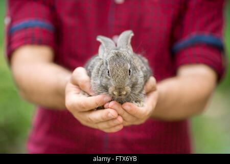 Rabbit. Animals and people - Stock Image