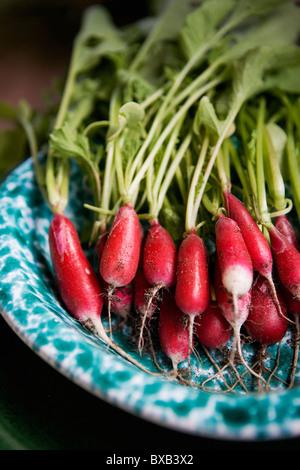Fresh radish on plate - Stock Image