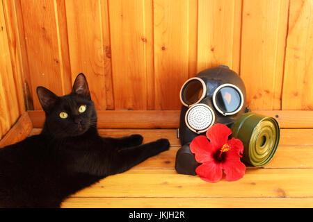 Chat noir, fleur d'hibiscus rouge et masque à gaz noir sur fond en bois. - Image de l'éditeur