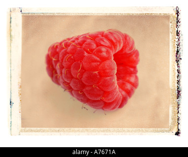 Red Raspberry - Stock Image