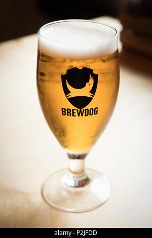 Verre de Brewdog Punk Iap a servi dans le DogTap, Ellon, Aberdeenshire, Ecosse, Royaume-Uni - Image