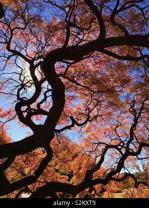 Tokyo, autumn - Stock Image