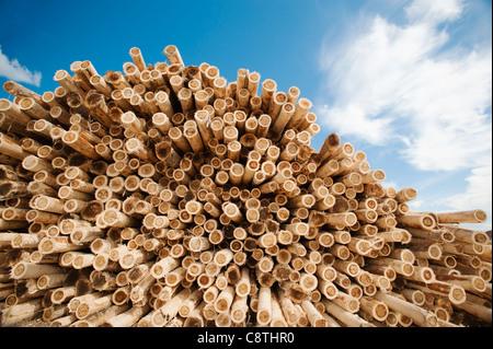 USA, Oregon, Boardman, Stack of timber against blue sky - Stock Image