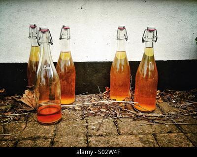 Accueil infusion, bouteilles de cidre fait maison - Image
