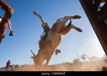 Low angle view of bull rider entering arena.  Mt Garnet Rodeo, Mt Garnet, Queensland, Australia - Stock Image