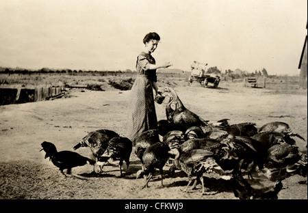 Farmer's Wife Feeding Turkey Flock - Stock Image