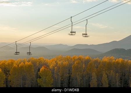 Aspens turn a bright yellow in Fall at the Arizona Snowbowl, near Flagstaff, Arizona, USA - Stock Image