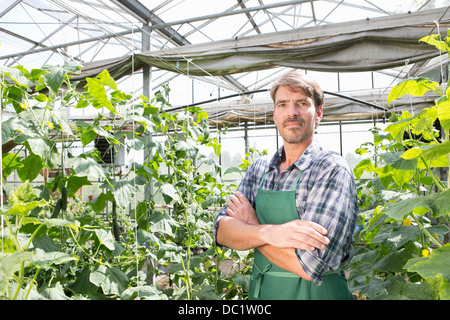 Portrait of organic farmer next to cucumber plants in polytunnel - Stock Image