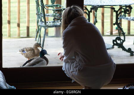 Ducks approach girl in dressing gown at cottage in Lake District, Cumbria - Stock Image