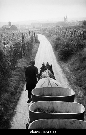1963 Horse-drawn trailer with grape crop Alsace France Europe - Stock Image