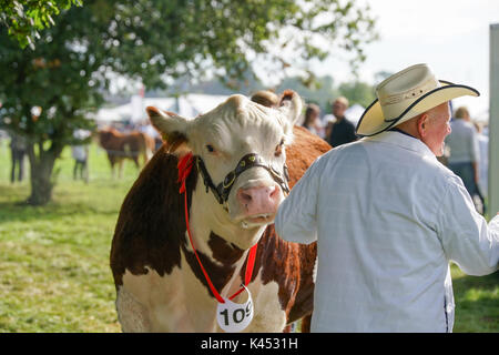 The Bucks Country Show - Stock Image