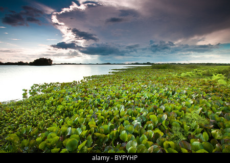 At the lakeside of Refugio de vida Silvestre Cienaga de las Macanas Nature Reserve, in Herrera province, Republic - Stock Image