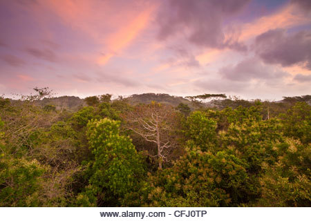 Early morning in the rainforest of Soberania national park, Republic of Panama. - Stock Image