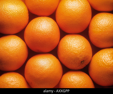 Orange, Citrus sinensis, Orange, Citrus, sinensis - Stock Image