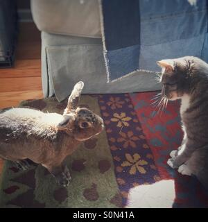 Bunny cautiously approaches cat. - Stock Image