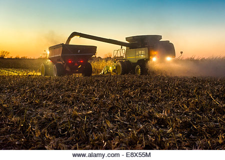 A farmer augers harvested yellow grain corn from a combine into a grain wagon during corn harvest in southern Iowa. - Stock Image