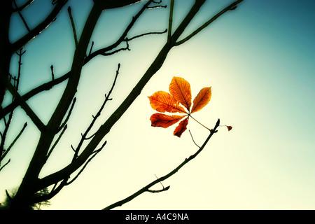 last leaf - Stock Image