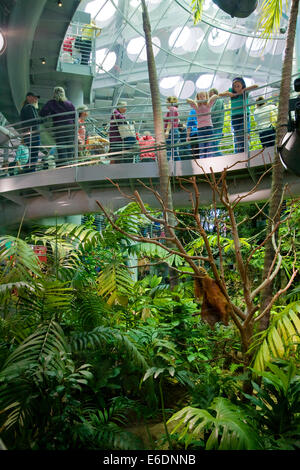Rainforests of the World Exhibit, California Academy of Sciences, Golden Gate park, San Francisco, California, USA. - Stock Image