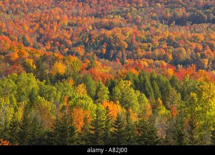 Autumn trees, Vermont, New England, USA - Stock Image