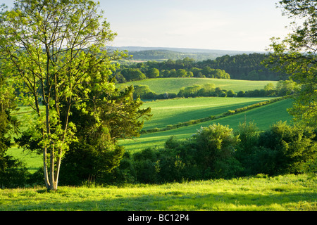 View south from North Downs at Newlands Corner, Surrey, UK - Stock Image