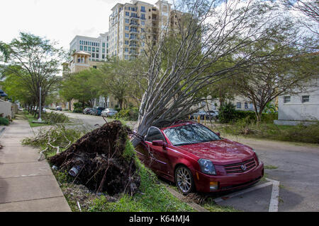 Miami, Florida, USA. 11th Sep, 2017. A car is crushed under an uprooted tree following Hurricane Irma in Miami, FL, Monday, September 11, 2017. Credit: Michael Candelori/Alamy Live News - Stock Image