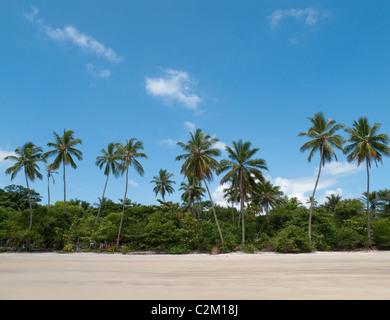Palm trees on beach, Boipeba Island, Bahia, Brazil - Stock Image