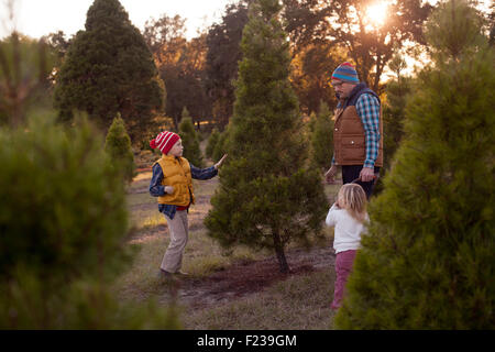 A family deciding which Christmas tree to cut at a tree farm. - Stock Image