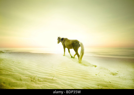 A pony on a sandy beach - Stock Image