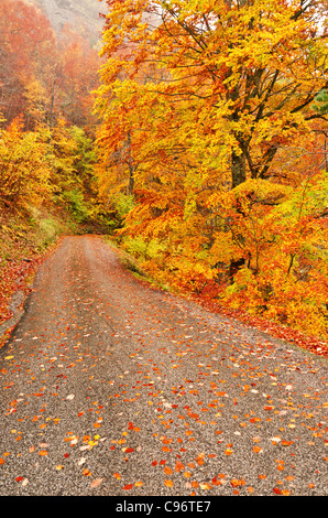 autumn scene of road with leaves under the trees - Stock Image