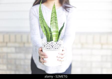Girl holding a snake plant - Stock Image