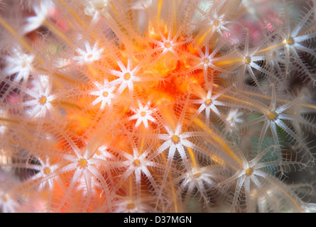 Close up of colorful underwater plant - Stock Image