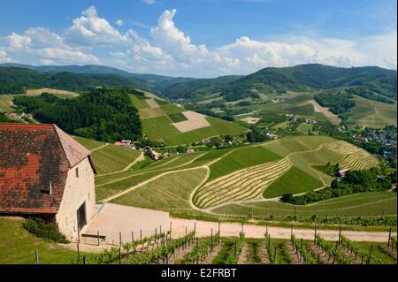 Germany Baden Wurttemberg Durbach vineyard - Stock Image
