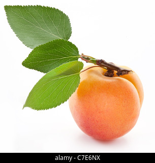 Apricot with leaf on a white background. - Stock Image